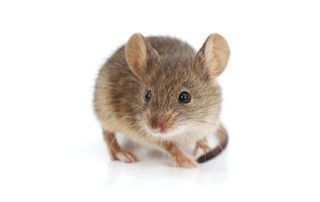 commercial house mouse control