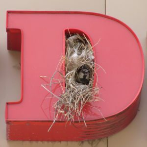 bird nest on commercial sign