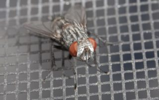 Close-up of a fly on a mesh screen.