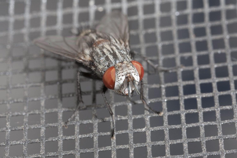 Maggots And Flies Connecting The Dots Copesan Blog