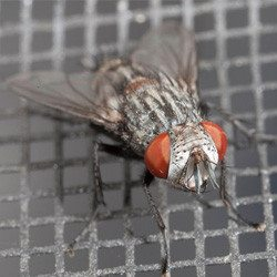 Comprehensive Fly Control