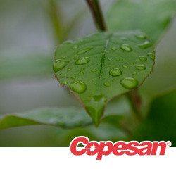 Dew drops on a leaf.
