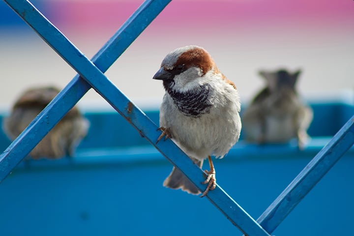 Bird perched on a metal fence.