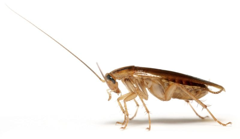 Close-up of a cockroach.