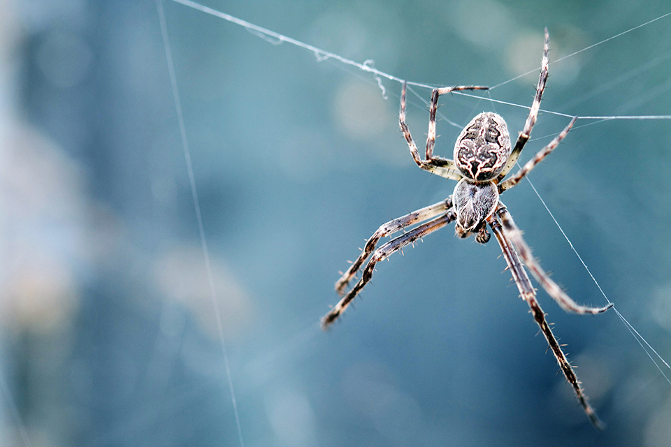 Large spider hanging from spider web.