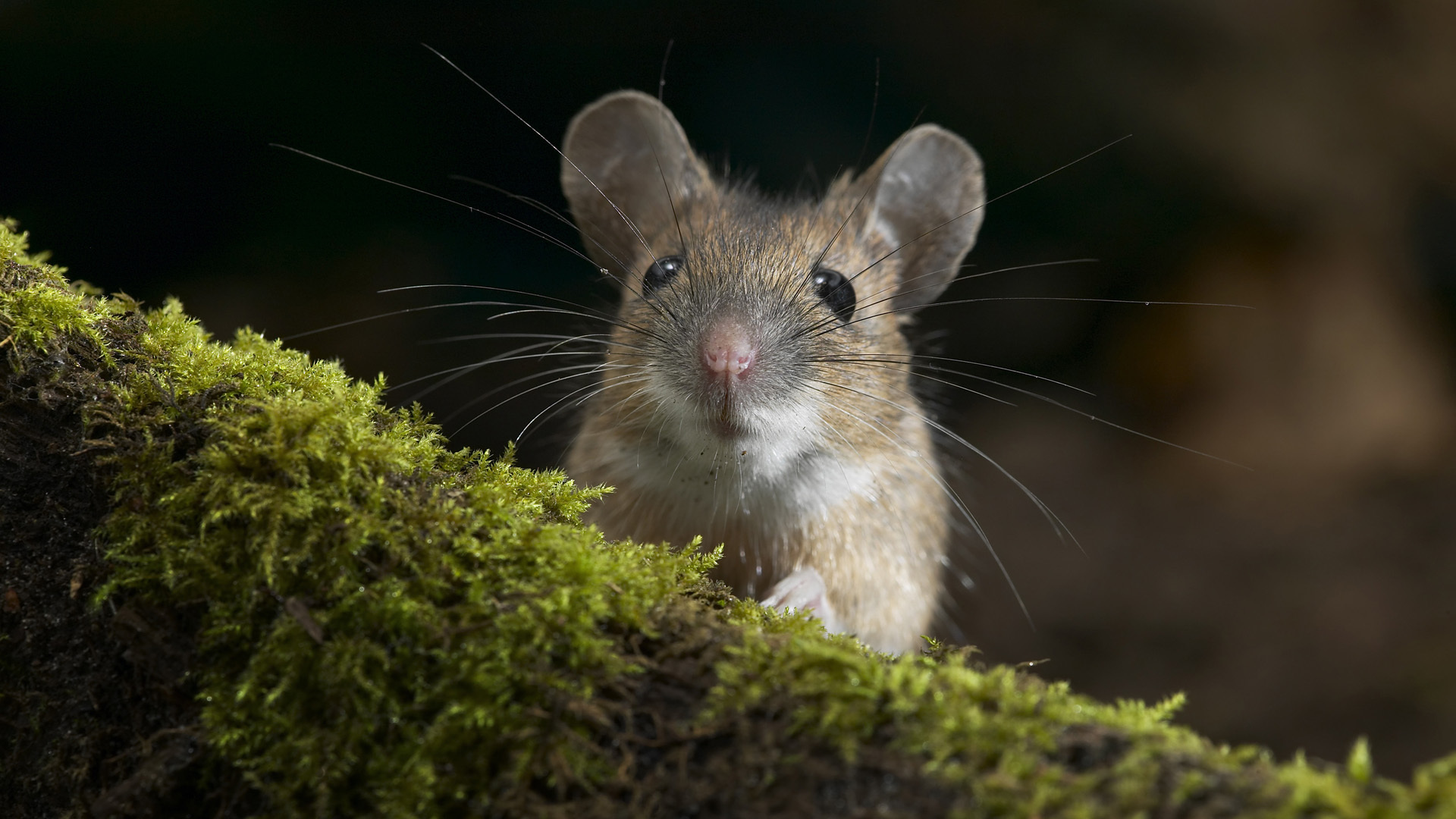 close up photo of rodent on grass