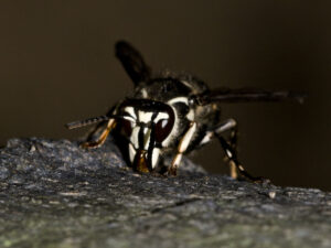 dark close up photo of stinging insect